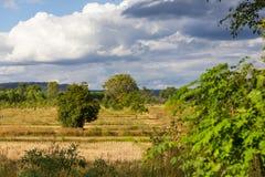 En sikt av fältet efter risskörden Royaltyfria Foton