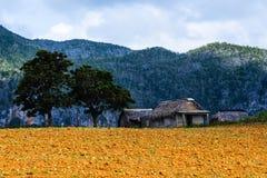 En sikt av landskapet Fotografering för Bildbyråer