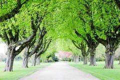 En sikt av parkerar vägen i en solig vårdag i skrov som öst parkerar royaltyfria bilder