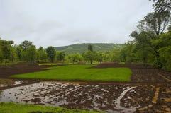 En sikt av ris brukar i konkan region av Indien Royaltyfria Foton