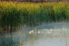 En sikt av sjön i höst Royaltyfri Foto