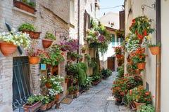 En sikt av Spello i Umbria som är berömda för smala gränder och balconie royaltyfri bild