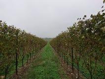 En sikt av vingården Montonale desenzano del garda royaltyfri foto