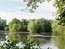 En sikt för sommarsjösida med träd, moln, alger och reflectio Arkivfoton