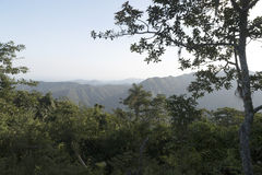 En sikt i en skog i Sri Lanka Royaltyfri Bild