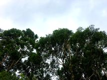 En sikt in mot himlen med australiska gumtrees i förgrunden royaltyfri fotografi