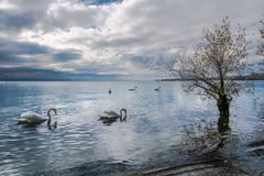 En sikt på sjöGenève från Preverenges, Schweiz royaltyfria foton
