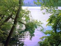 En sikt till och med träd på den blödde sjön Royaltyfri Bild