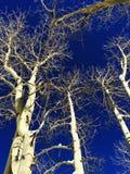 En sikt till och med träden Royaltyfria Bilder