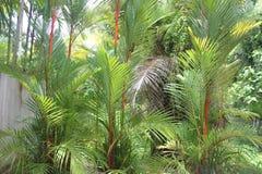 En sikt till tropiska blommor och träd i Nong Nooch den tropiska botaniska trädgården nära den Pattaya staden i Thailand Royaltyfria Bilder