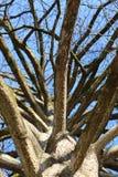 En sikt upp in i cypress Royaltyfri Foto