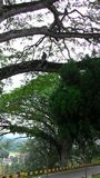 En sikt uppifrån, apa i trädet observera människosläktet Royaltyfri Foto