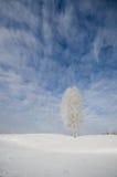 En singelbjörktree som täckas med rimfrost under blåttskyen och cl Royaltyfri Fotografi