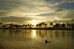 En sjö för kopplar av och kokospalmer i solnedgången i Hawaii Royaltyfria Bilder