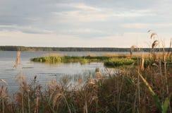 En sjö i aftonen Fotografering för Bildbyråer