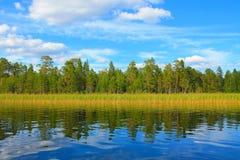 En sjö i ett mest forrest arkivfoton