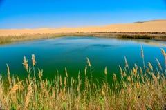 En sjö i mitt av öknen Arkivbild