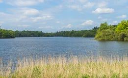 En sjö i Virginia Water Park i Surrey, UK royaltyfri foto