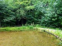 En sjö med ett gömt Wood hus Royaltyfria Foton