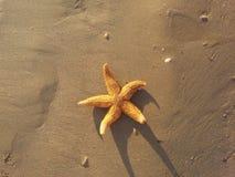 En sjöstjärna i sanden Arkivfoton