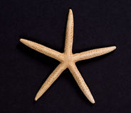 En sjöstjärna på svart bakgrund Arkivfoto