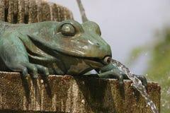 En sköldpadda i en springbrunn Arkivfoton