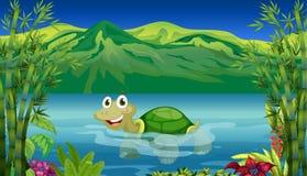 En sköldpadda i havet Arkivfoton