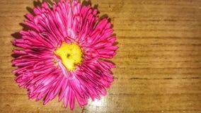 En skönhet av rosa färgblomman Arkivbild