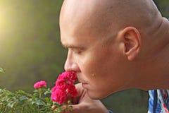 En skallig man sniffar rosa rosor En rörande man, sinnesrörelser man Royaltyfria Foton