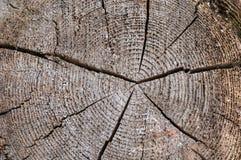 En skiva av ett gammalt träd med koncentriska årliga cirklar och en spricka i mitten Texturen av det gamla tr?det royaltyfri fotografi