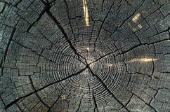 En skiva av gammalt trä Arkivfoton