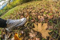En sko för person` s på höstsidor av en skog royaltyfri foto