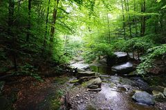 En skog Fotografering för Bildbyråer