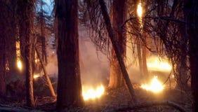 En skog bränner Royaltyfria Foton