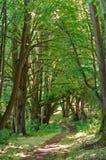 En skog för bana på våren, en härlig bana i sommarskogen, en skogbana mellan träden Royaltyfria Bilder