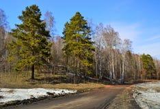 En skog för väg på våren. Royaltyfria Foton