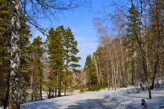En skog för väg på våren. Fotografering för Bildbyråer