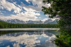 En skog reflekterad i en sjö Royaltyfri Fotografi