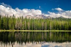 En skog reflekterad i en sjö Royaltyfri Bild