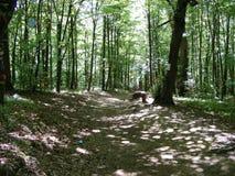 En skogbana i den solbelysta skogen Arkivfoto