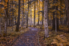 En skogbana i höst arkivbilder