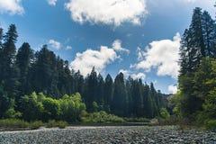 En skogflod på en solig dag Royaltyfria Bilder