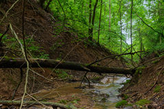 En skogliten vik i en ravin Royaltyfria Foton