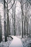 En skogsbevuxen bana som täckas i snö Royaltyfri Bild