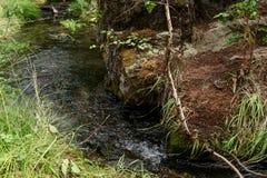 En skogström som flödar i berget Altai Royaltyfria Foton
