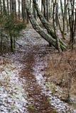 En skogväg i ett skogsbevuxet område Pinjeskog och vägen mellan träden Skog i vintern arkivfoto