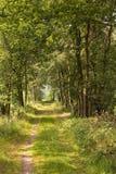 En skogväg i Kampinaen, ett naturområde i Nederländerna Arkivfoton