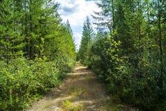 En skogväg i mitt av taigaen arkivbild