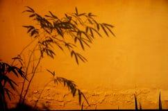 En skugga av bambu Arkivfoton