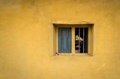 En skugga till och med fönstret fotografering för bildbyråer